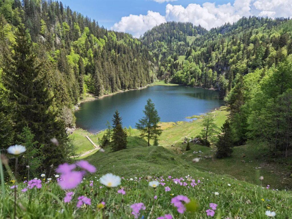 Vom Walchsee Österreich zur Taubensee Wanderung - tolle Wanderung von Kössen über Almen und Wald